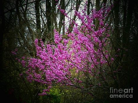 Spring Redbuds by Joyce Kimble Smith