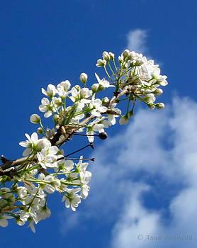 Anne Babineau - spring sky