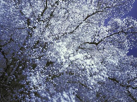 Spring snow by Domagoj Borscak