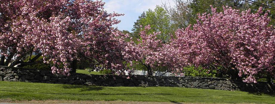 Spring Splendor by Laurel Porter-Gaylord