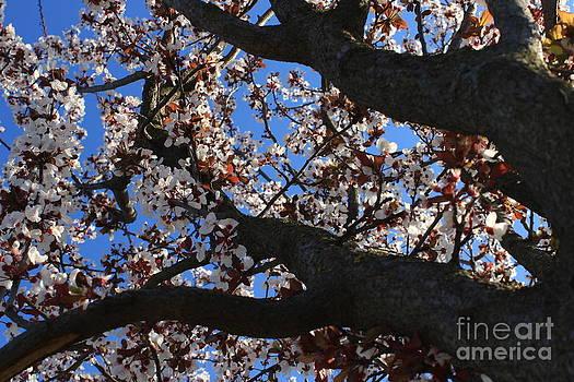 Spring Time by Alexandra Bento
