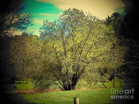 Spring Tree  by Joyce Kimble Smith