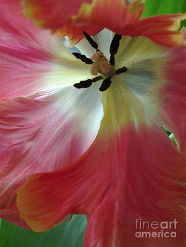 Spring Tulip 2 by Patricia King