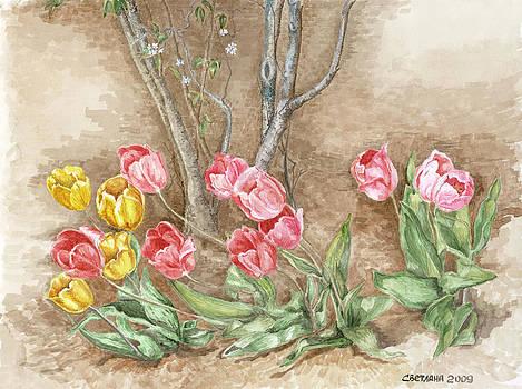 Spring Tulips by Svetlana  Jenkins