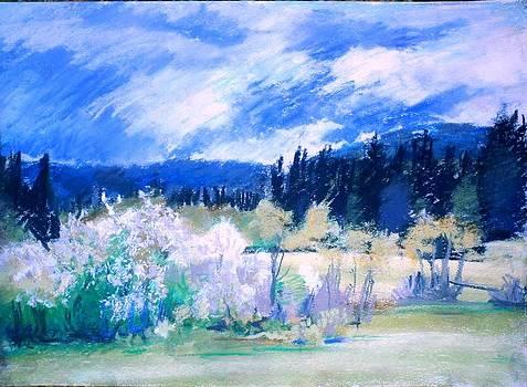 Spring by Vaidos Mihai