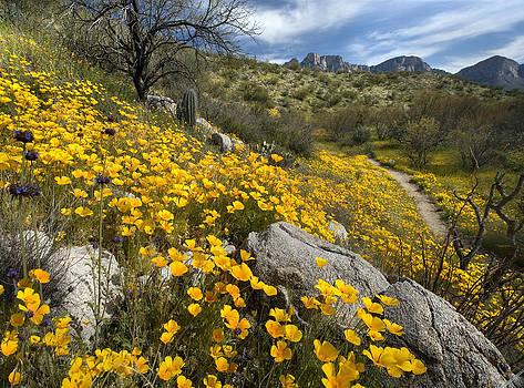 Spring Wildflowers by Bryan Allen