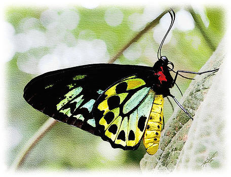 Springtime Butterfly by Tom Schmidt