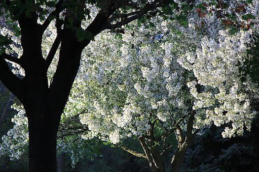 Springtime in Wisconsin by James Hammen
