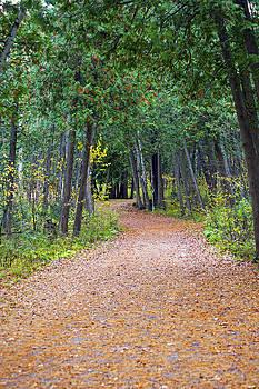 Elaine Mikkelstrup - Springwater Park Fall Path