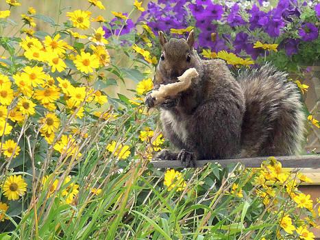 Amalia Jonas - Squirrel