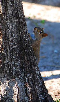 Squirrel by Ama Arnesen