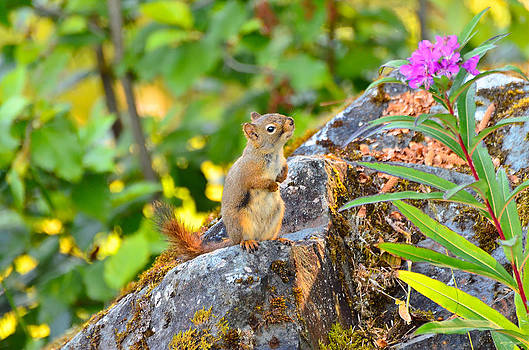 Squirrel Appreciation by Light Shaft Images