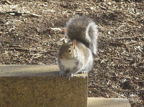 Squirrel by Ausra Huntington nee Paulauskaite