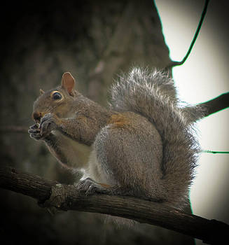 Squirrel by Bobby Martin