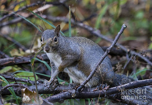 Squirrel  Ecureuil by Nicole  Cloutier Photographie Evolution Photography