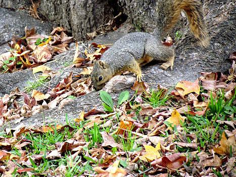 Squirrel by Evgeniya Sohn Bearden