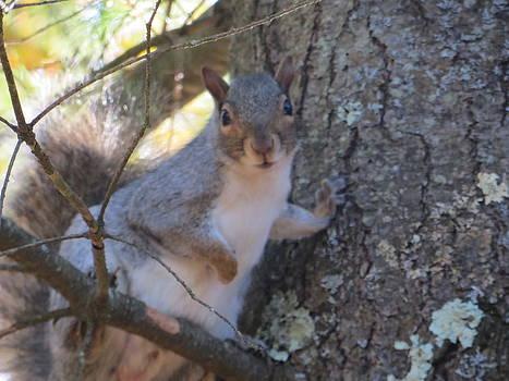 Squirrel in Tree by Pamela Turner