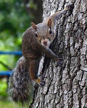 AnnaJo Vahle - Squirrel on a tree