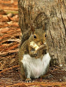 Squirrel on Shrooms by Rick Frost