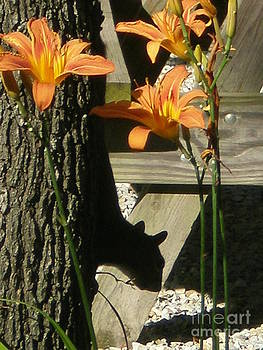 Squirrel Silhouette by Sandy Owens