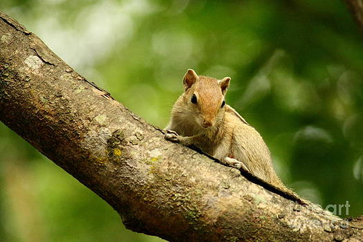 Squirrel by Vishakha Bhagat
