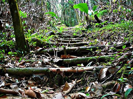 Stairs In The Forest by Jenny Senra Pampin