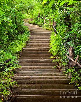 Stairway to forest by Noppakun Wiropart