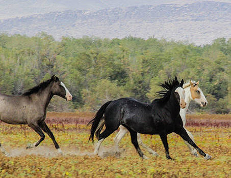 Stallion out in Front by Beverly Siegel