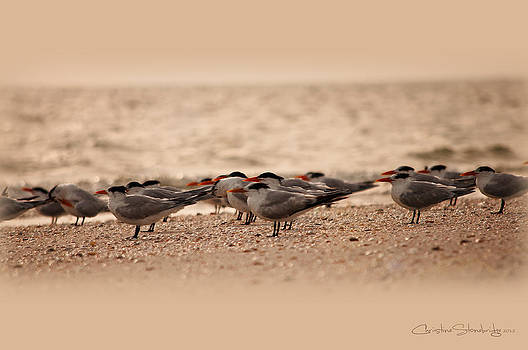 Standing in Formation by Christine Stonebridge