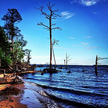 Standing Tall Goose Creek State Park by Joan Meyland