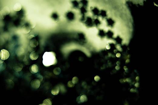 Star Eyes 2 by Grebo Gray