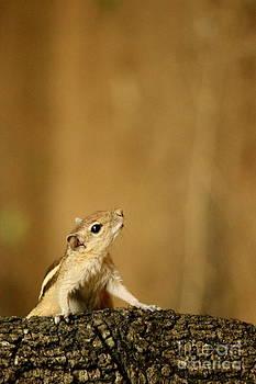 Star gazing by Vishakha Bhagat