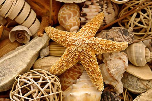 Carmen Del Valle - Starfish Display