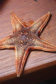 Starfish  by Tanya Peters