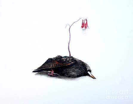 Starling and Wild Columbine by Sarah Mushong