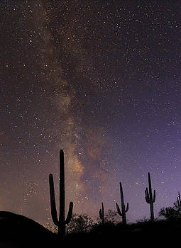 Nathan Mccreery - Starry Night Saguaros