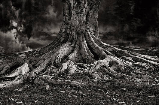 Stay Deeply Rooted While Reaching For The Sky by Bob Kramer