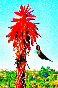 Stickybeaking Hummingbird by Brian D Meredith