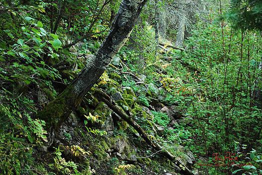 Still Forest by Sheryl Cox