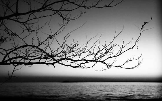 Stillness Speaks by Jayne Howard