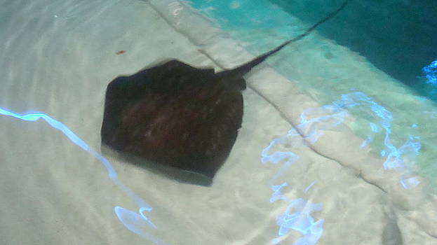 Sting Ray with Neon Light Reflection by Sharon Martin