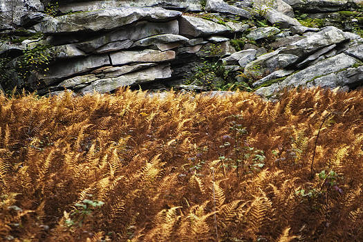 Stone Wall and Fern by Frank Morales Jr