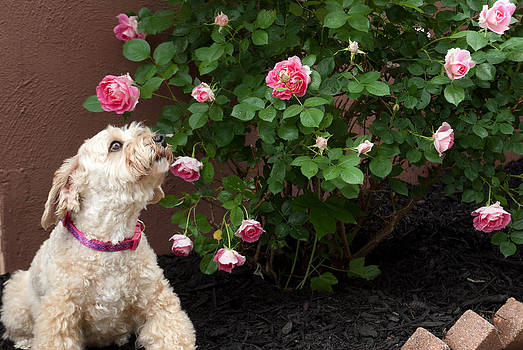 Stop and Smell the Roses by Donna Harding