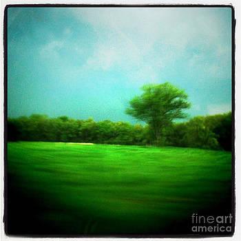 Storm Swish by Trish Hale