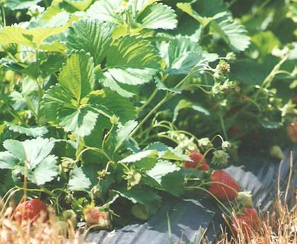 Lee Hartsell - Strawberries