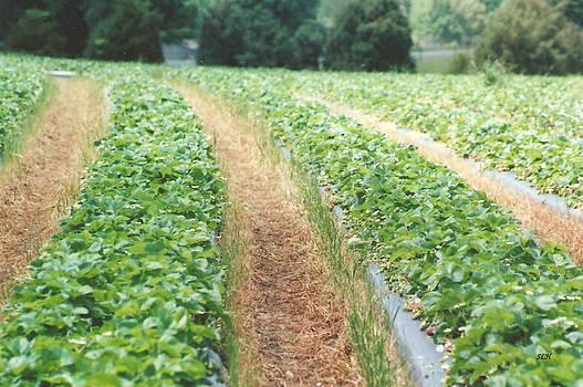 Lee Hartsell - Strawberry Fields