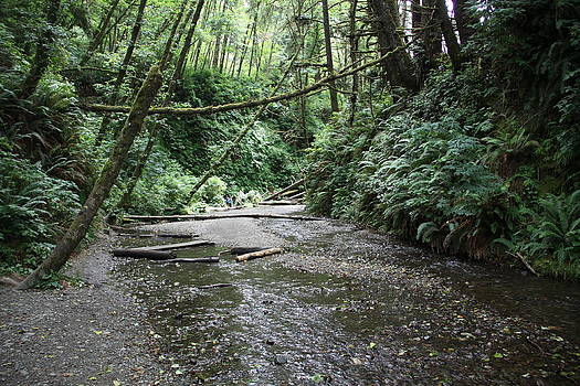 Stream at Fern Canyon by Michael Picco