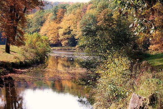Darlene Bell - Stream Meets River