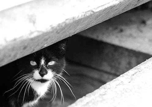Julie Niemela - Street Cat