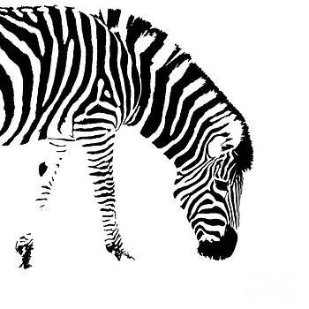 Stripes by John Basford